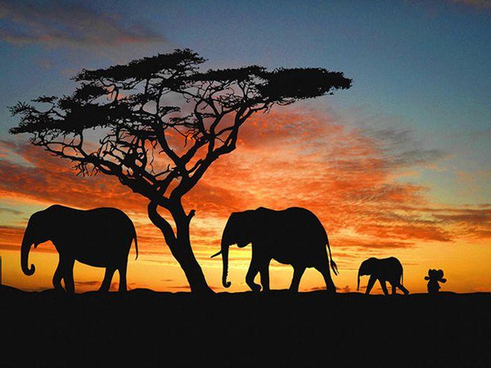 在非洲找到同類了 (網上圖片)