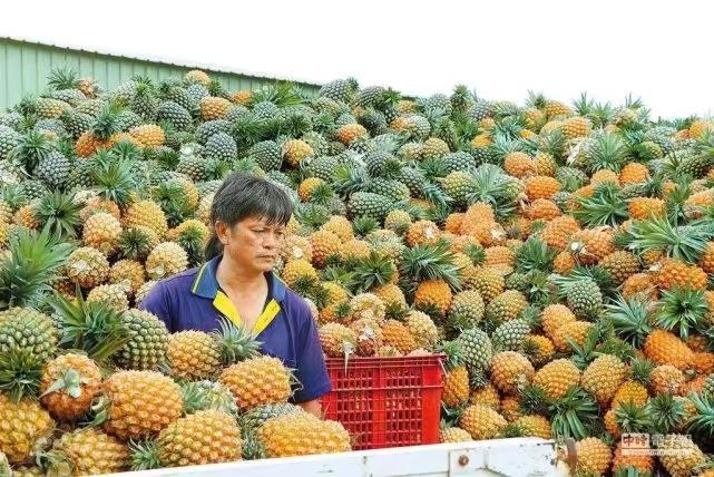 大陸禁了台灣菠蘿。