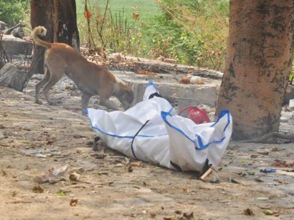 野狗啃食法官的遺體。