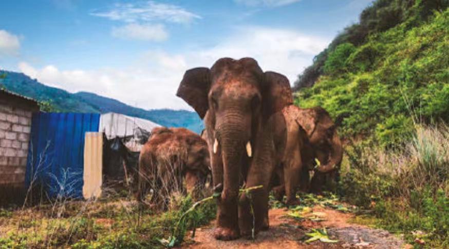 大家争相报道野象旅行团。