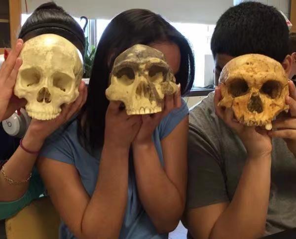 隨著時間推移腦容量越來越大,最左邊為進化了的現代智人頭骨。