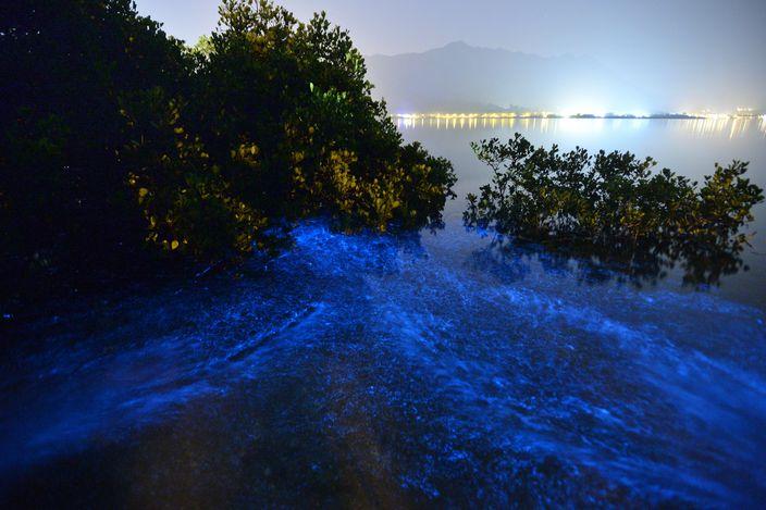 150124_CR_三門仔夜光藻