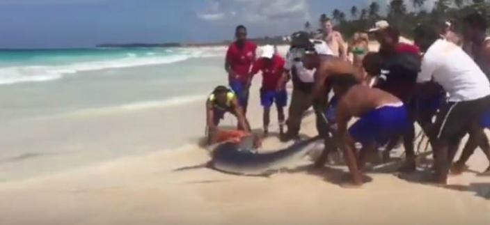 大批男人把鯊魚拖行到沙灘(片段截圖)
