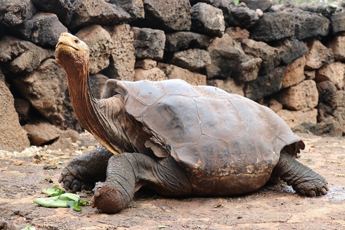 地表最強種龜!龜爺爺「一己之力拯救全族」60年狂生800龜孫子!網笑翻:到處都是親戚