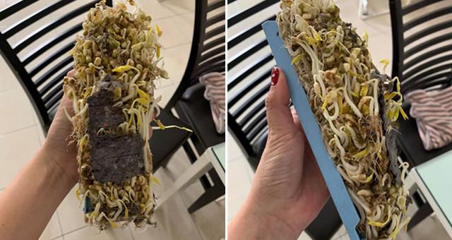 五告胎歌!洗衣機濾網「竟長出豆芽」…還衍生出勵志心得 全網嚇呆:不敢吃豆芽了啦