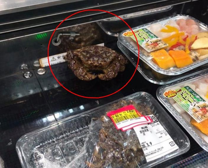 哥就是高貴!超市螃蟹疑「不滿被賤賣」居然「撕開保鮮膜逃走」網笑:再加把勁逃回海裡
