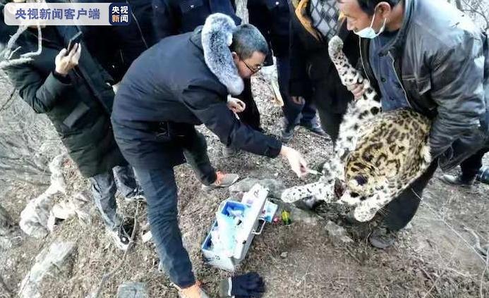 山西晉城警方成功解救國家一級保護動物金錢豹