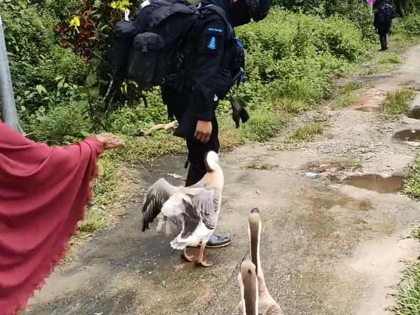 泰国士兵全副武装巡逻 途经村庄遭白鹅穷追不舍攻击