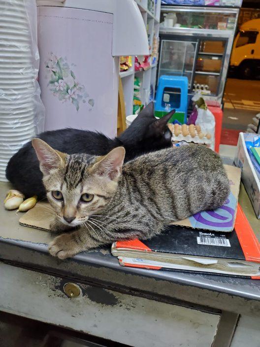 深水埗汝州街发生偷猫案 一名女子疑盗去店舖猫