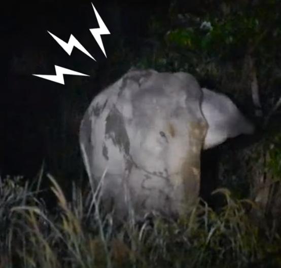 泰国母象不断哀嚎求援 人类发现小象堕坑受困多日救出