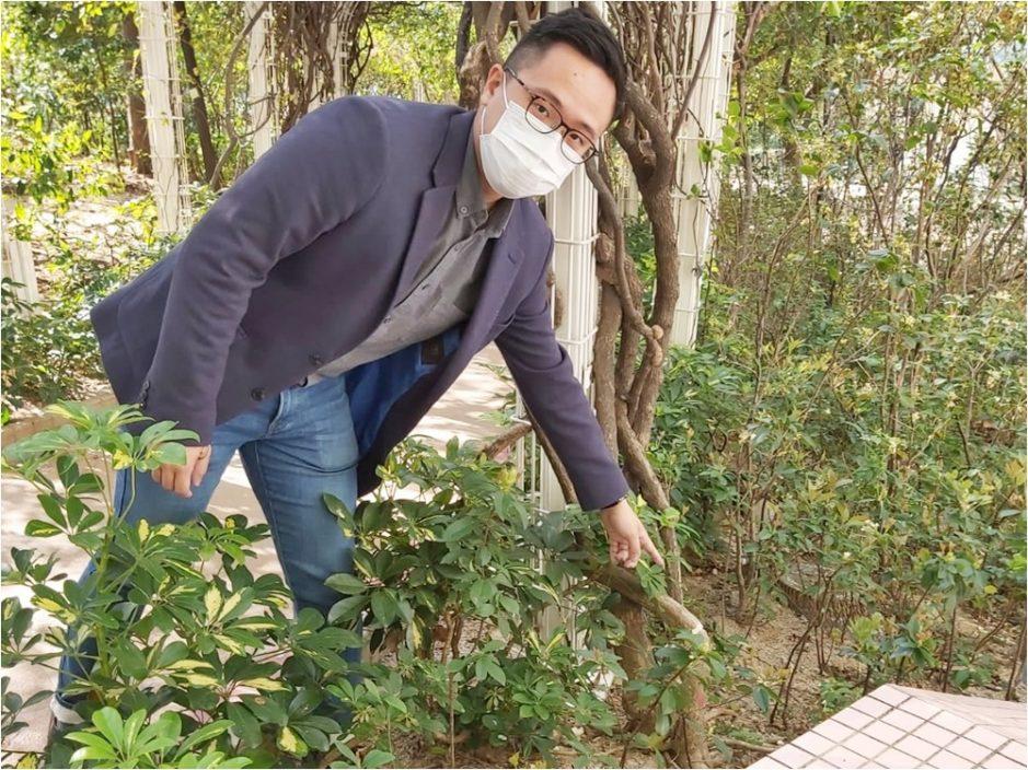 元州邨簕杜鵑花根部被切斷 疑遭惡意破壞