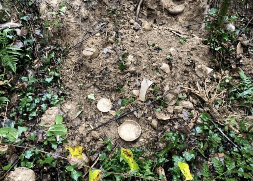 杭州男挖笋发现土色瓷碗 证为春秋战国文物