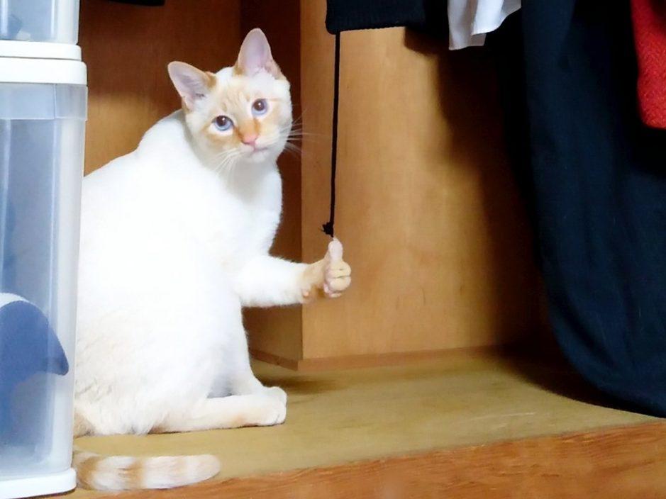 """百厌猫捣乱后""""俾LIKE""""相疯传 网民狂呼好可爱"""