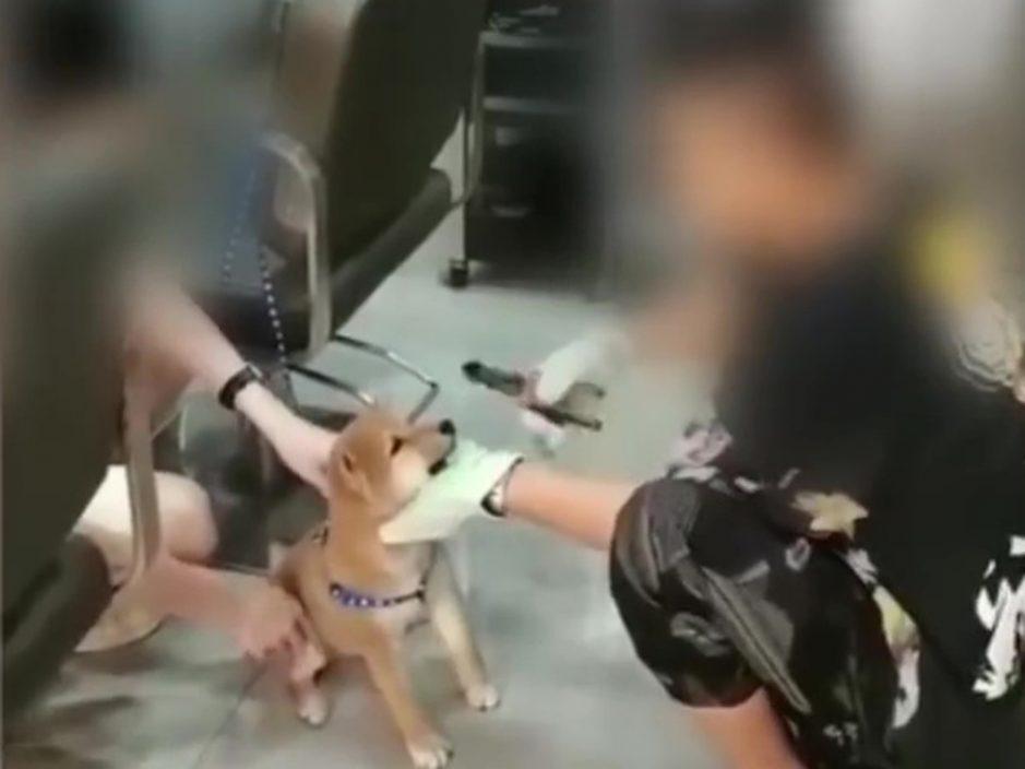 疑用铁钳拔柴犬牙 男理发师称狗咬人要剪掉尖牙