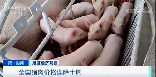 豬肉價格降降降!