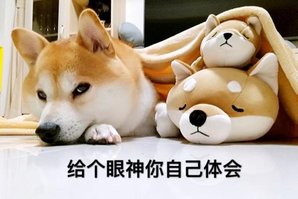 """""""铲屎官""""注意了!5月1日起遛狗不牵绳将违法"""
