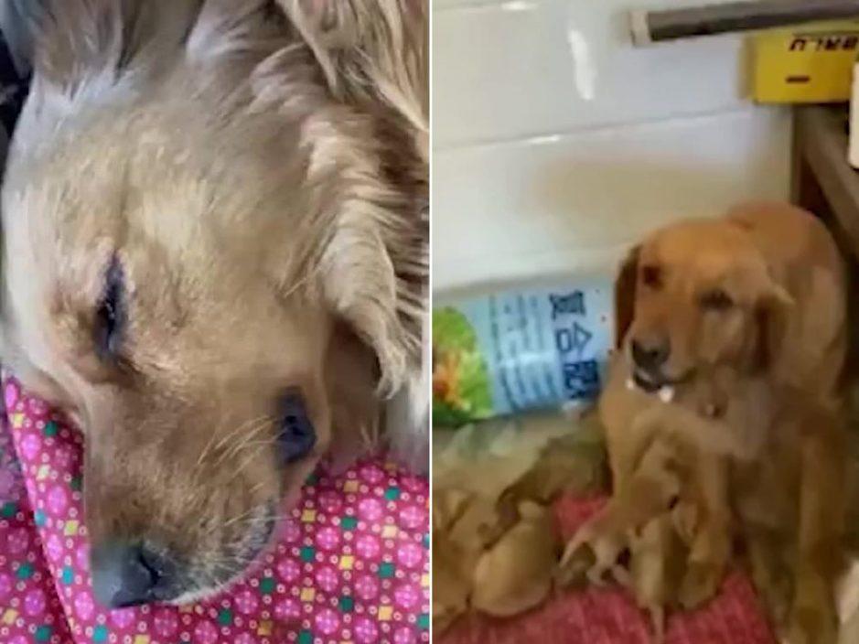 狗妈妈遇车祸死前口吐白沫仍坚持为小狗喂奶