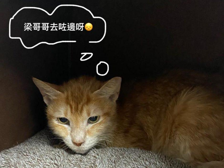 【Kelly Online】梁晃维被捕还柙归家无期 冀为10岁爱猫贵贵寻家