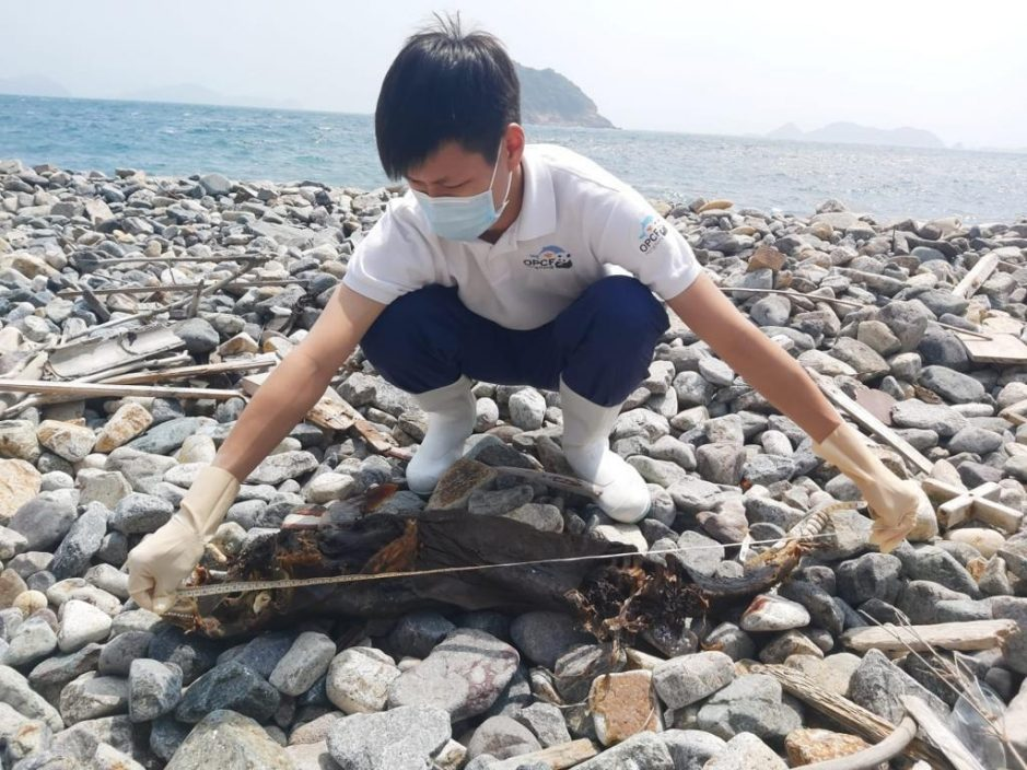 清水湾再发现鲸豚搁浅 同月第四宗