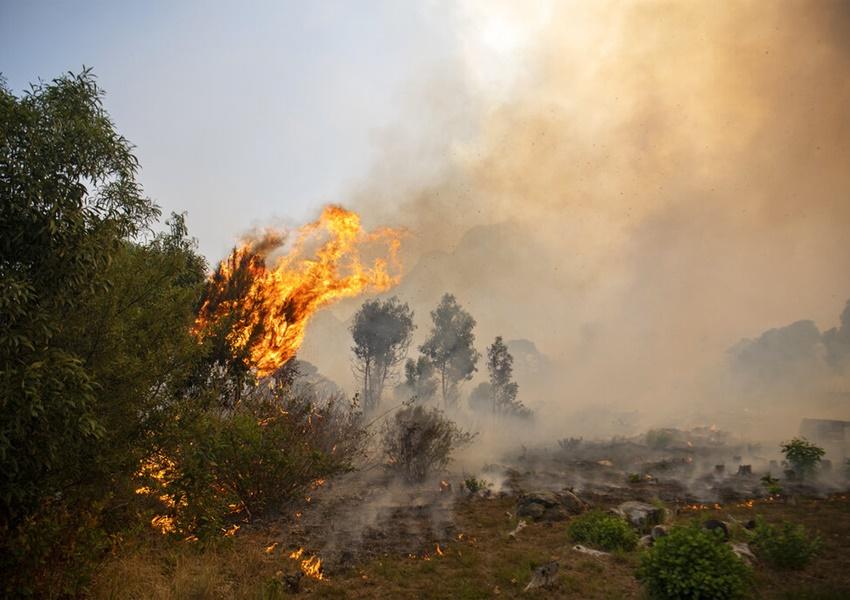 南非著名桌山国家公园山林大火 开普敦大学图书馆被焚毁