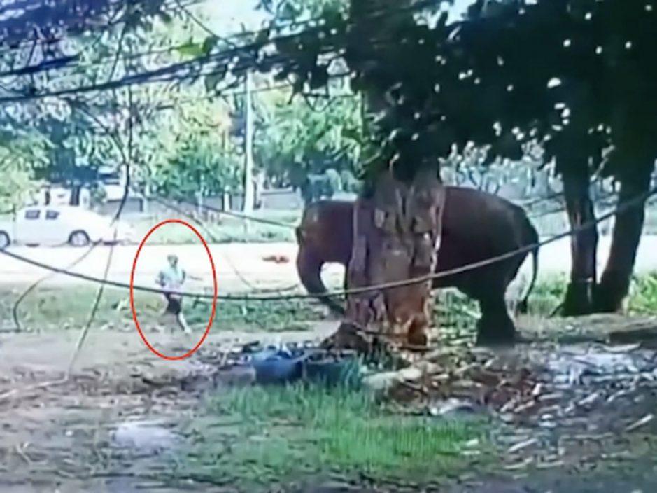 男子喂大象吃甘蔗 惨遭象鼻推倒狂踩骨折致亡