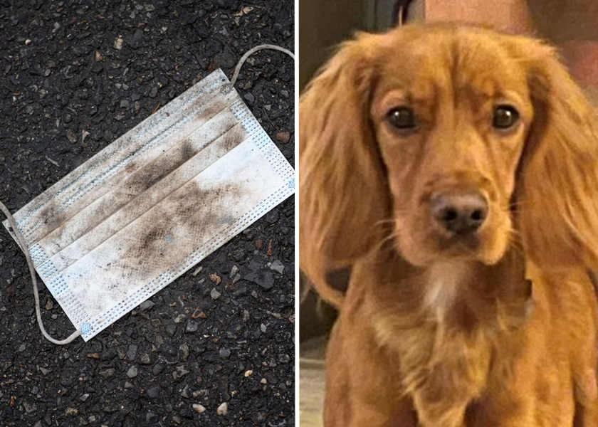 英国小狗误吞街边口罩 致败血症死亡