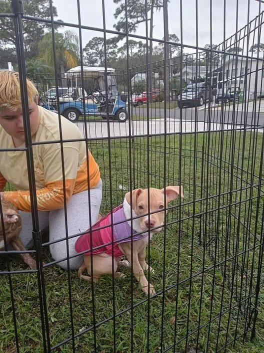 佛州11岁女童冲回火场救两爱犬 同葬身火海