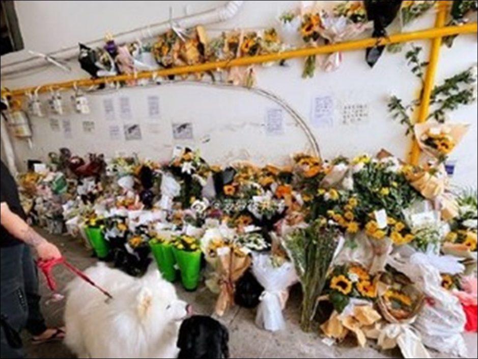 四川德国牧羊犬被警开8枪撃毙 有附近居民指为退役警犬