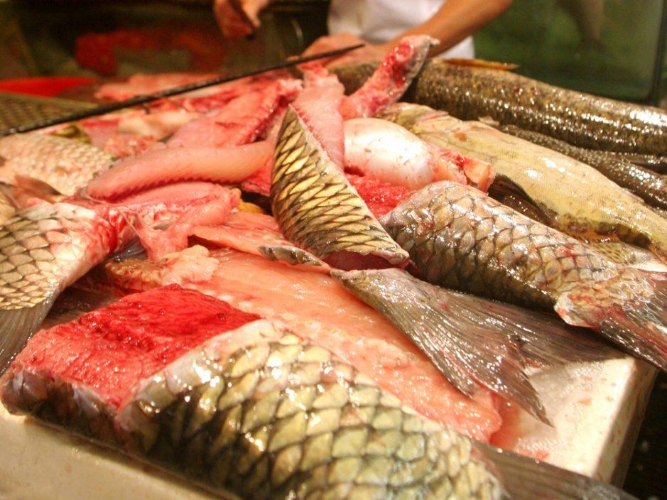 九龙城街市一鲩鱼样本验出孔雀石绿 食安中心令停售