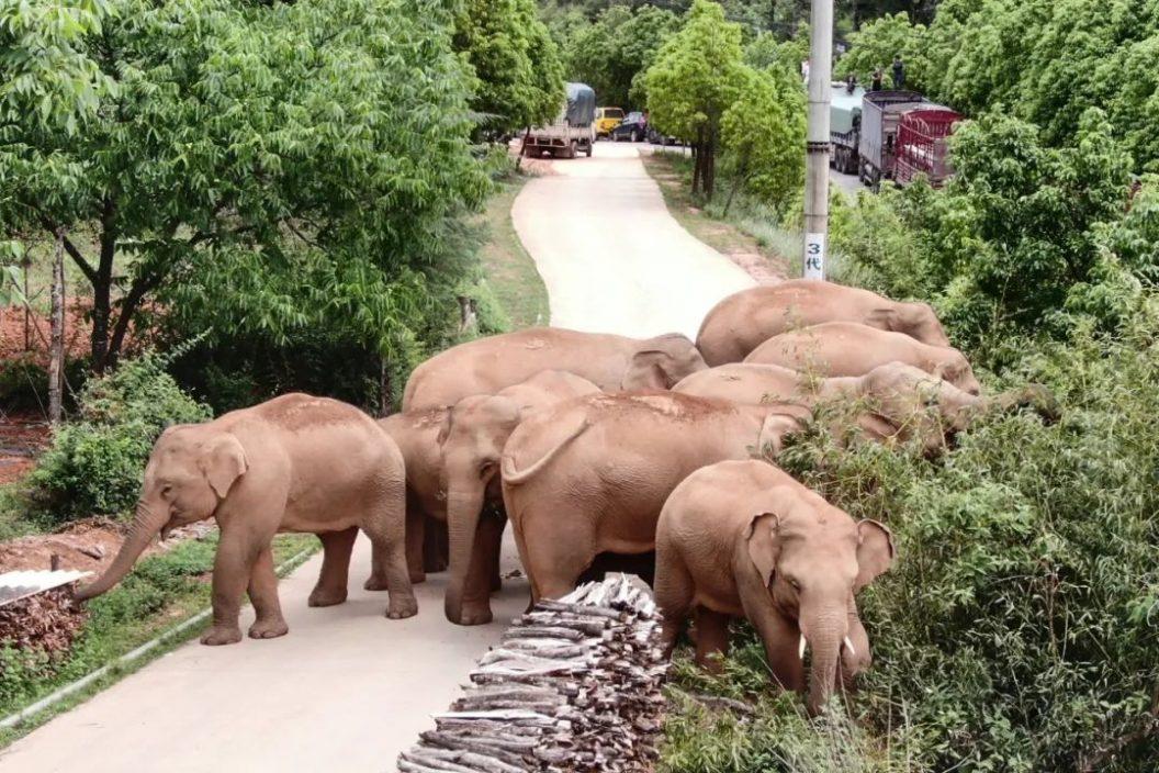 通过追大象,我们学到了什么?