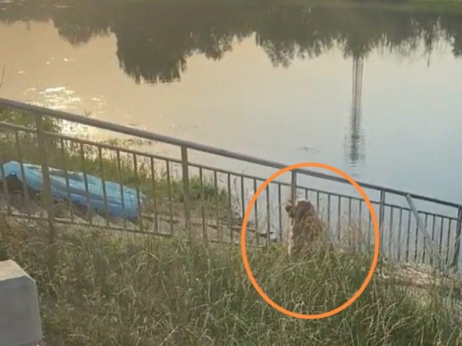 河南3名男女不慎掉河溺毙 金毛犬河边守候主人眼睛哭肿惹人怜