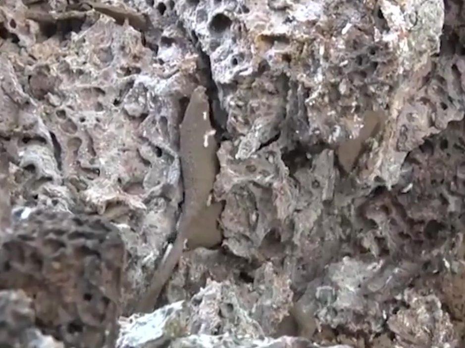 湖北发现60多年的超大蚁穴 蚁王蚁后体长5厘米