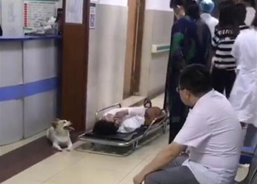 江苏妇车祸受伤送院忠犬紧随寸步不离 网民受感动:太有灵性