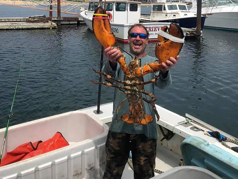 捕龙虾潜水员遭座头鲸吞下 30秒被吐出大难不死