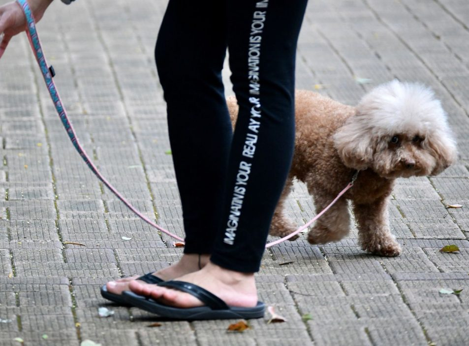 本港累计17猫狗曾染疫 近400宠物曾检疫