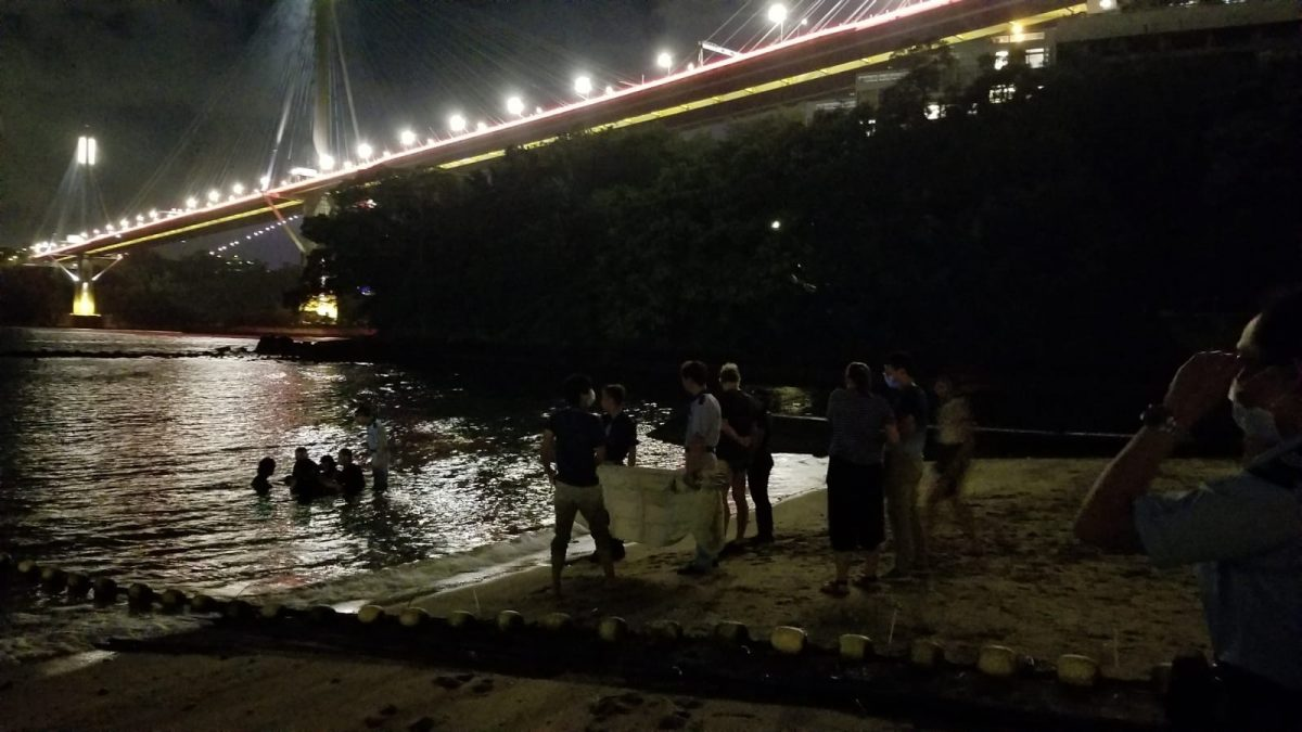 汀九湾泳滩现海豚 海洋公园专家到场协助