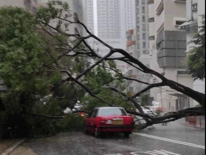 黄雨下香港仔大树倒塌 压中两的士幸无人伤