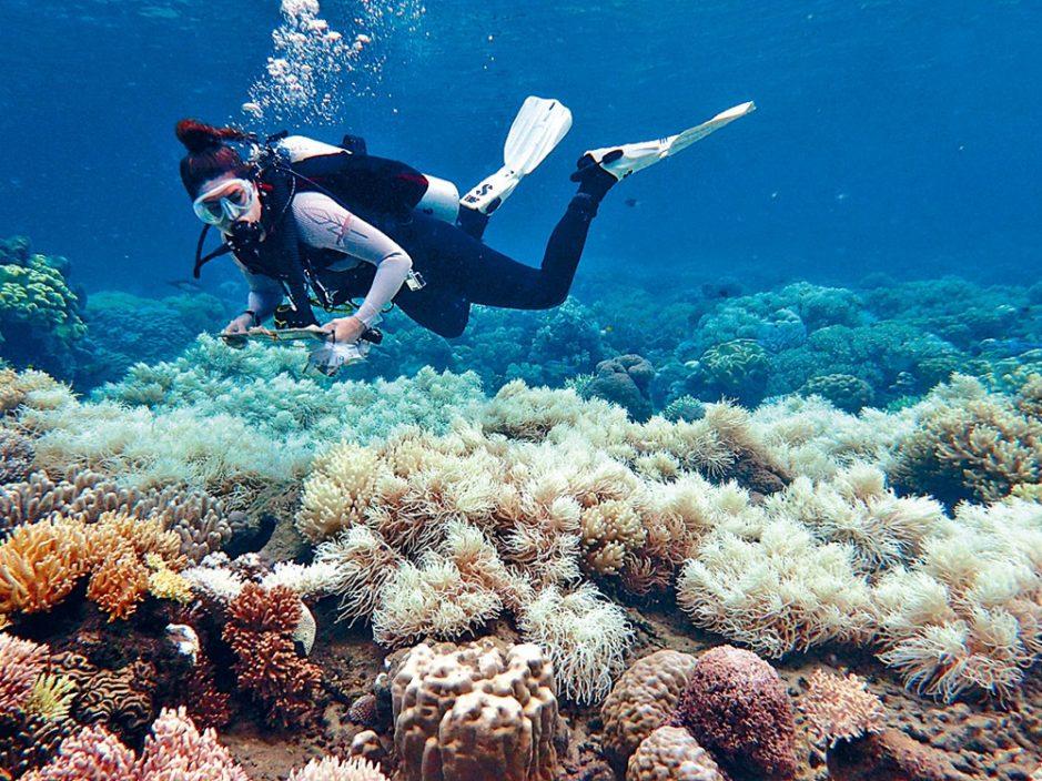 """珊瑚出现急剧白化 澳洲大堡礁或降格为""""濒危世界遗产"""""""
