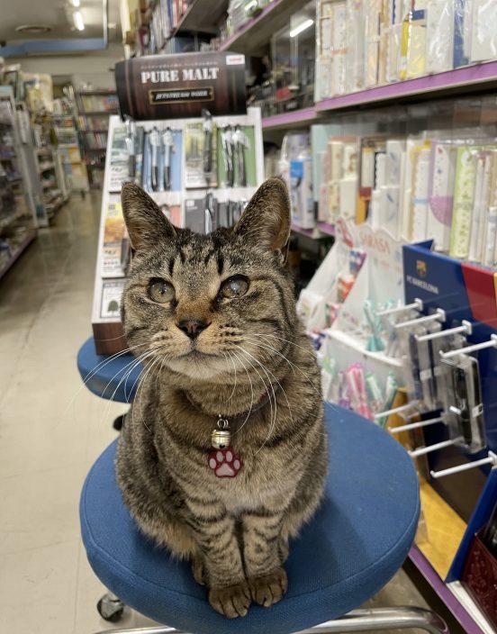 猫咪被装入纸盒遗弃路边? 文具店老板急澄清:牠是猫店长