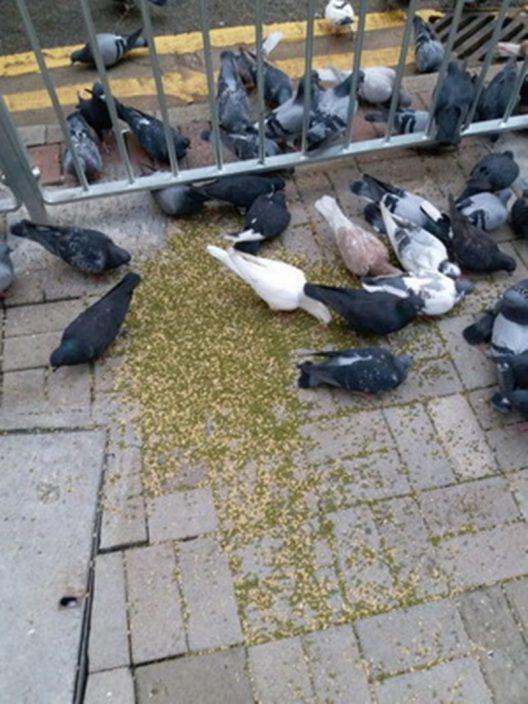 今年首5月170人次涉喂雀弄污地方遭检控 港岛东贩卖阻街严重